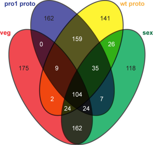Venn diagram of geneswith top 500 readcounts for each sample. Numbers of genes that are in the top 500 group for one or more or the four samples (vegetative mycelium, sexual mycelium, wild-type protoperithecia, pro1 protoperithecia) are given. In this analysis, only reads that map within 100 to 400 bases from the 3' end of the mRNA were used to account for the 3' bias in the microdissection samples and different mRNA lengths. An analysis using read counts for complete predicted mRNAs gave similar results (data not shown).