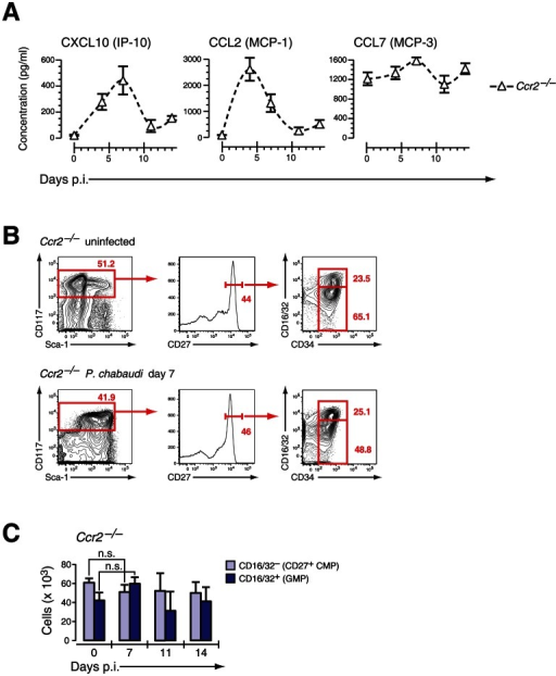 Ccr2- mice induce IFN-γ-dependent chemokines but do not mobilize early myeloid progenitors.A. Serum concentration of IFN-γ induced chemokines in Ccr2- mice infected with P. chabaudi. Data are shown as mean ± SEM of serum concentration of respective chemokine in three infection experiments with 4–5 mice per each experimental group. B. Phenotype of LIN− BM cells in Ccr2- mice uninfected and at day 7 after infection with P. chabaudi stained for indicated marker. C. Absolute numbers (per femur/pair) for Ccr2- LIN− c-Kithi CD27+ cells are shown as mean ± SEM per individual subsets during infection with P. chabaudi.