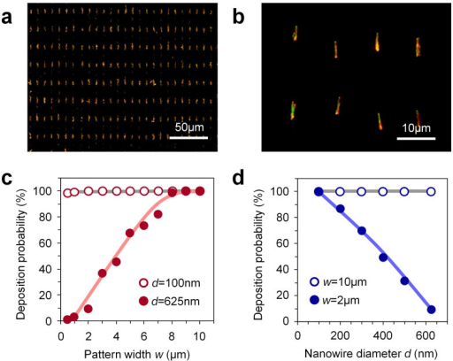 (a) Typical dark field optical microscopy and (b) magnified images of aligned 625 nm diameter nanowire on 3 μm width of hydrophilic patterns. (c) Deposition probability data of nanowires when varying hydrophilic pattern width. The data for nanowires with the diameters of 100 nm and 625 nm were shown. (d) Deposition probability data of nanowires when varying nanowire diameters. The data for the hydrophilic pattern widths of 2 μm and 10 μm were shown. The coating cycles are 20 for the experiments in Figure 2 (c) and (d).
