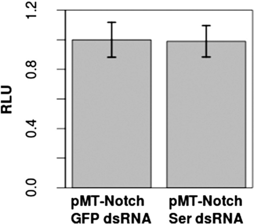 Addition of Ser dsRNA had no effect on the Notch activation in S2 cells in comparison with cells treated with control green fluorescent protein (GFP) dsRNA, indicating that the small amount of Ser expression is either not translated or does not significantly contribute to Notch activation upon transfection with pMT-NFL.This validates our assumption that the Notch activation which occurs in S2 cells is by a DSL-ligand-independent mechanism. Dl was not tested, as studies have already shown a lack of Dl mRNA and protein in S2 cells (Fehon et al., 1990; Graveley et al., 2011). Again, experiments were carried out with two technical replicates and three biological replicates, with means of the technical replicates used for a paired t-test to assess significance. Error bars represent SD.DOI:http://dx.doi.org/10.7554/eLife.04415.009