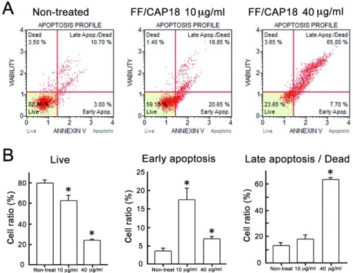 Detection of apoptosis of HCT116 cells after treatment with FF/CAP18. Cells were treated with 10 or 40 μg/ml FF/CAP18 for 96 h and subjected to the combined Annexin V binding-7-AAD staining assay. (A) Representative results of the assay carried out with non-treated HCT116 cells (left panel), and with HCT116 cells treated with FF/CAP18 at 10 μg/ml (middle panel) or 40 μg/ml (right panel). Based on the reactivity with Annexin V and the intensity of the 7-AAD fluorescence, cells can be classified into four categories: dead, live, early apoptosis and late apoptosis/dead. Triplicate experiments were conducted and representative results are shown. (B) The percentage of live cells (left panel), cells in early apoptosis (middle panel) and cells in late apoptosis or dead (right panel). Triplicate samples were used to obtain the mean and standard deviation. The asterisks indicate statistical significance. *P<0.05.