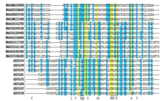 Acyl-coA binding domain alignment in BnACBPs.Alignment was generated using Vector NTI. Identical residues in all ACBPs are highlighted in yellow, identical residues in most of ACBPs are in blue. YKQA and KWDAW motifs correspond to the acyl-coA-binding site. The coenzyme-A head group-binding site are underlined. Capital letters indicate residues conserved in all ACBP of all species.