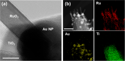 (a) TEM image of RuO2 nanowire on Au nanoparticle-decorated TiO2 nanowire. It is clearly seen that the nanowire is grown on the Au nanoparticle (scale bar 20 nm). (b) High-angle annular dark field (HAADF) scanning TEM image of 3D branched nanowires. EDS elemental distribution map of Ru, Au, and Ti (scale bar 100 nm).