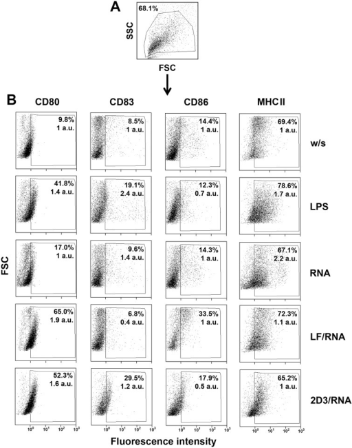 Activation status of bone-marrow-derived murine dendritic cells after transfection with lipoplexes LF/RNA and 2D3/RNA.A. Dead cells were excluded from DC population according to size and structure of cells. B. Surface expression of CD80, CD83, CD86 and MHC II by DCs after transfection with lipoplexes LF/RNA and 2D3/RNA. DCs without any stimulation (w/s) and treated with naked RNA isolated from B16 cells served as negative controls. DCs treated with LPS served as a positive control. DCs were stained with anti-CD80 (phycoerythrin), anti-CD83 (phycoerythrin), anti-CD86 (fluorescein isothiocyanote) and anti-MHC II (phycoerythrin), and were analyzed by flow cytometry. Ten thousand cells were counted for each sample. Data are presented as percent of fluorescent cells and mean fluorescence intensity of whole population of DCs normalized to w/s group (in arbitrary units, a.u.).