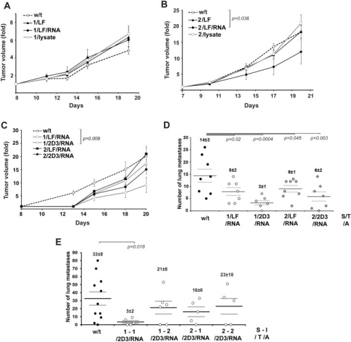 Anti-tumour and anti-metastatic effects of DC vaccination under prophylactic and therapeutic schemes.A and B. Krebs-2 adenocarcinoma growth retardation after treatment with DC vaccines. w/t—non-treated mice with Krebs-2 injected with saline buffer. C and D. LLC tumor growth retardation and suppression of metastasis after treatment with DC vaccines. For A-D type of DC vaccine is presented as S/T/A—Scheme/ Transfectant/ Antigen source. w/t—non-treated mice with LLC injected with saline buffer. E. Suppression of B16 melanoma metastasis after treatment with DC vaccines. For E type of DC vaccine is presented as S-I/T/A—Scheme—Immunization number/ Transfectant/ Antigen source. w/t—non-treated mice with metastatic melanoma injected with saline buffer. Data were statistically analysed using one-way ANOVA with post hoc Fisher test. Data are presented as mean±S.E.M. p value <0.05 was considered to be statistically significant. Scheme 1: Healthy mice received i.v. DC vaccines according to presented S/T/A type. On day 7 after DC vaccination tumors were induced in mice by intramuscular injection of Krebs-2 cells (105 cells/mouse) or LLC cells (6×105 cells/mouse) into the femur muscle of right hindfoot. In the case of B16 model healthy mice received i.v. Dc vaccines according to presented S-I/T/A type: on day 7 before tumor transplantation (S-I: 1–1) and on day 14 and 7 before tumor transplantation (S-I:1–2). B16 was induced by transplantation of B16 cells (105 cells/mouse) into lateral tail vein. Scheme 2. Tumors were induced in mice by intramuscular injection of Krebs-2 cells (105 cells/mouse) or LLC cells (6×105 cells/mouse) into the femur muscle of right hindfoot or intravenous inoculation of B16 cells (105 cells/mouse) into lateral tail vein. On day 4 after tumor transplantation mice received i.v. Dc vaccines according to presented S/T/A or S-I/T/A type.