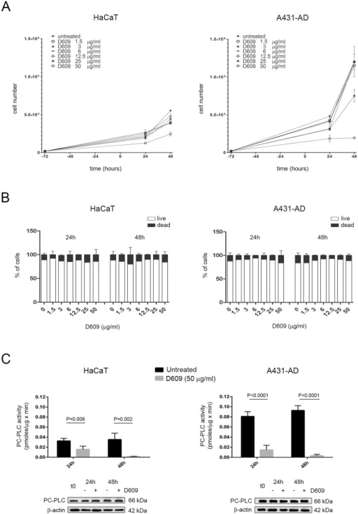 Effects of the PC-PLC inhibitor D609 on PC-PLC activity, PC-PLC protein expression and cell proliferation in HaCaT keratinocytes and in the squamous carcinoma cell line A431-AD.A) Proliferation assays performed on cells seeded 72 hours before adding different doses of D609 at t = 0 (● = untreated cells; □ = 1.5 μg/ml, ▲ = 3 μg/ml, ▼ = 6 μg/ml, ◇ = 12.5 μg/ml, * = 25 μg/ml and ○ = 50 μg/ml) and monitored for 24h and 48h afterwards. Cell count (mean ± SD, n = 3) of live cells was obtained by Trypan blue exclusion assays and by automated cell counter, as described in the Materials and Methods section. B) Cell counting (mean percentage ± SD, n = 3) of either live (white columns) or dead cells (black columns) measured by Trypan blue exclusion test in the cultures used for the proliferation assays shown in panel A. C) Top panel: PC-PLC activity (mean ± SD, n = 3) measured by Amplex Red assay in total lysates of control (untreated = black columns) or 50 μg/ml D609-treated cells (grey columns). Statistical analyses were performed using t-test; HaCaT, P = 0.006 at 24h and P = 0.002 at 48h; A431-AD, P<0.0001 at 24h and at 48h. Bottom panel: Representative Western blot analyses of PC-PLC protein expression performed in total lysates of cells cultured in the presence or absence of 50 μg/ml D609 (n = 3 independent experiments); t0 = untreated cells at 72 hours after seeding; β actin was used as quantitative loading control.