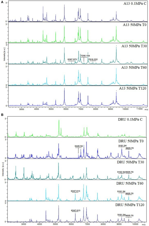 MS proteomic profiling of L. paracasei A13 (A) and L. acidophilus DRU (B) showing MS fingerprinting of the sample conditions (0.1 MPa C, 50 MPa T0, 50 MPa T30, 50 MPa T60, and 50 MPa T120). The m/z-values are expressed in Da and the amplitudes are reported in a scale of intensity 104 arbitrary units (a.u.). Legend: (a) A13 0.1 MPa C, (b) A13 50 MPa T0, (c) A13 50 MPa T30, (d) A13 50 MPa T60, (e) A13 50 MPa T120, (f) DRU 0.1 MPa C, (g) DRU 50 MPa T0, (h) DRU 50 MPa T30, (i) DRU 50 MPa T60, (j) DRU 50 MPa T120.