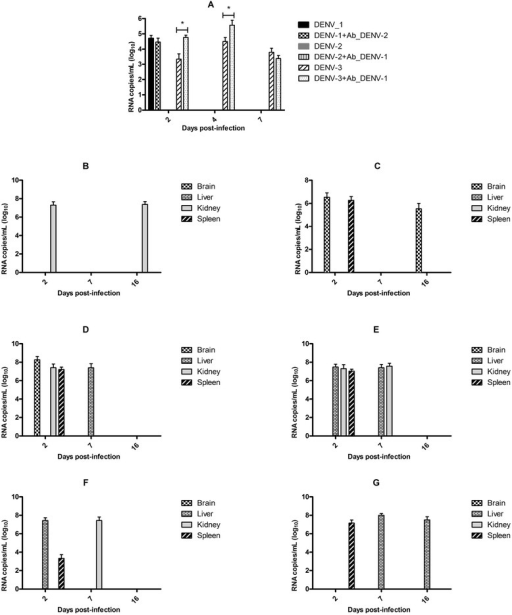 Susceptibility of C57BL/6 mice to infection with DENV. The animals were infected with D3/BR/SL3/02 (n = 5) (a, b and c) and D2/BR/RP/RMB/2009 (n = 5) (a, d and e) isolates, and Mochizuki strain (n = 5) (a, f and g). The infection was confirmed by detection of the virus genome by real-time RT-PCR in serum (a) and different organs (b-g). The animals were infected with D3/BR/SL3/02 and D2/BR/RP/RMB/2009 (n = 5) isolates, and Mochizuki strain, which were incubated with PBS (b, d and f, respectively) or enhancing antibodies (c, e and g, respectively). Data represent the mean values ± SD. The results are representative of two similar and independent experiments. *p < 0.05 when viruses incubated with heterologous immune sera were compared to viruses incubated with PBS