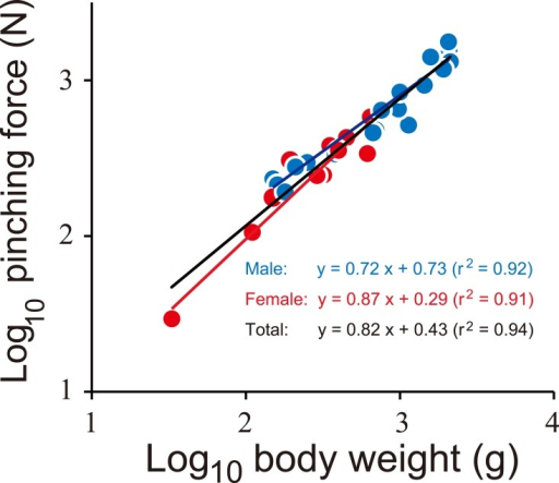 The relationship between body weight and pinching force of the coconut crabs.Blue and red indicate male and female, respectively. Black line is a regression line using the combined data of both sexes.