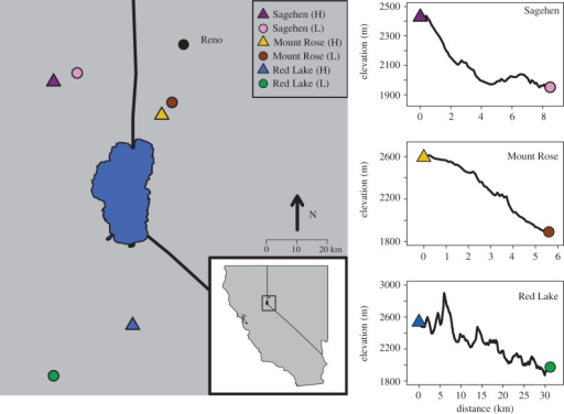 Map and elevation profiles of the six sites where mountain chickadees were sampled (created using R 3.3.0, R Core Team 2015). Inset shows region of California and Nevada where sites were sampled. Large blue shape in the middle of the inset represents Lake Tahoe. Panels show the elevation profiles found between the three pairs of elevational transects (points were sampled every 30 m as the duck flies between pairs of sites in ArcGIS). Triangles represent high elevation locations and circles represent low elevation locations.