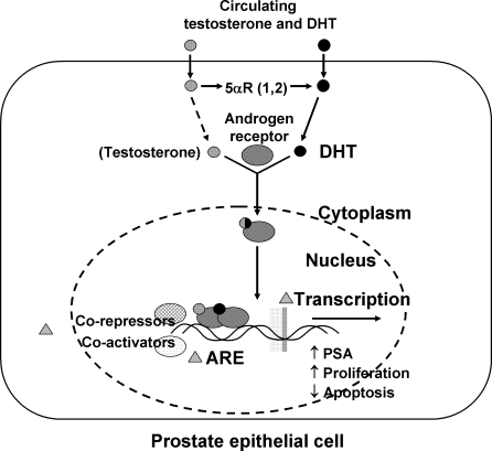 testosterone study results