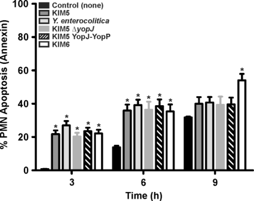 Analysis of PMN phosphatidylserine (PS) externalization.Y. pestis KIM5, KIM5 YopJ-YopP, KIM5ΔyopJ, KIM6 and Y. enterocolitica were grown at 37°C, combined with PMNs, and incubated for the times indicated. PS externalization was determined by annexin V-FITC and flow cytometry following interaction with Yersinia Results are expressed as the mean ± SEM of at least three experiments. *, represents difference from PMN controls (P<0.05).