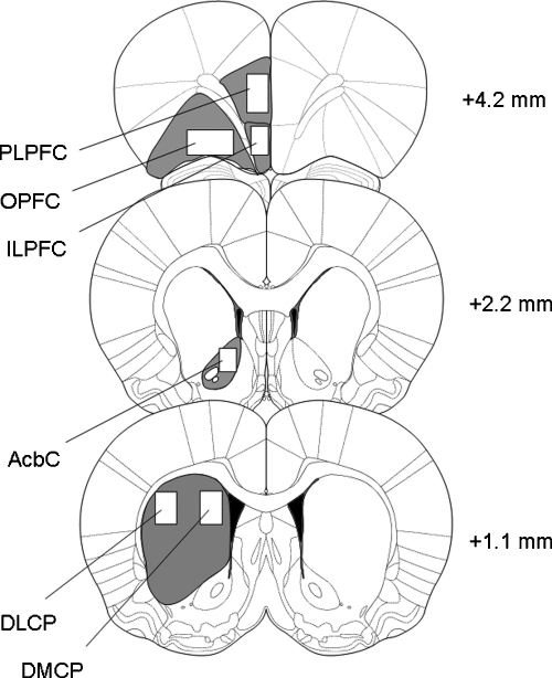 Diagrams of coronal sections of the rat brain showing t | Open-i