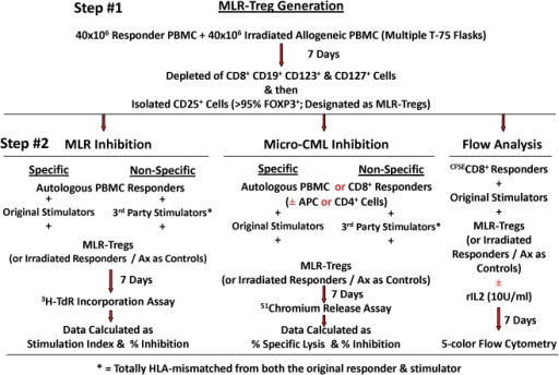 Flow diagram depicting the culture system for the generation of MLR-Tregs (step #1) and their utilization in various MLR, micro- CML and flow cytometric assays (step #2).