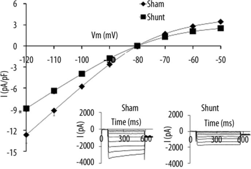 IK1 voltage relationship for normal cardiomyocytes and volume-overload induced hypertrophied cardiomyocytes. The inset in each graph shows the respective representative current responses at and -120 mV for IK1. Data are presented as average current density ±SEM with n=5–10. * P<0.05 Sham vs. Shunt.