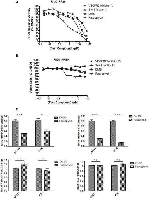 Identification of kinase inhibitors that inhibit PAX3-FOXO1 transcriptional activity.Rh30_PRS9 cells were treated with increasing concentrations (2.8 nM to 56 µM) of compounds for 2 h before determination of A) PRS9 reporter activity and B) viable cells (percentage relative to DMSO-treated cells). C) Fascaplysin decreased the expression of CPT1A and PTN in a PAX3-FOXO1-dependent manner. Rh30, Rh41, NIH3T3, and RD cells were treated with 1 µM fascaplysin or DMSO for 2 h. CPT1A or PTN mRNA levels in samples treated with fascaplysin were normalized to that of cells treated with DMSO (samples treated with DMSO were arbitrarily set as 1). * p<0.05; *** p<0.001; ns p>0.05.