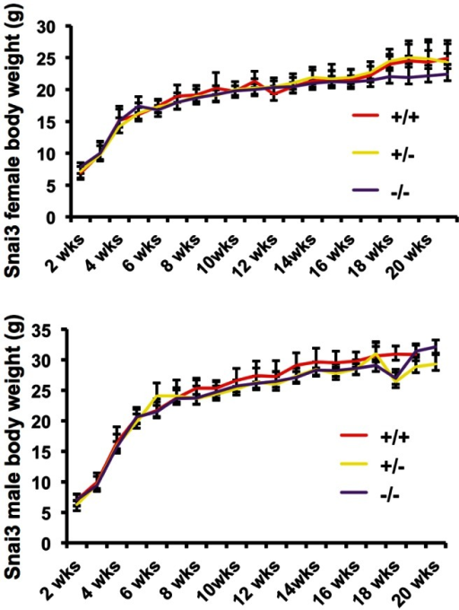 Snai3/Snai3 homozygous mice exhibit normal postnatal growth.Growth curves of Snai3/Snai3 homozygous, Snai3/+ heterozygous and wild type littermate mice. Weights (in grams) were plotted against age (in weeks). Data presented are from at least four mice in each group. Error bars indicate the standard deviations.