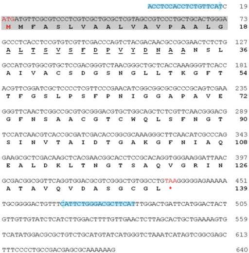 Complete nucleotide and amino acid sequences of YZP.RNA-seq and de novo contig assembly were conducted to identify the YZP gene. The complete nucleotide sequence of the YZP cDNA was confirmed by PCR cloning using the primers shown in Supporting Information Table S1 and Table S2, and is presented in plain capital letters with the start and termination codons presented in red. The nucleotide sequences of one set of cloning primers (YZP1) are indicated with blue arrows. The translated amino acid sequence is presented in bold capital letters, whereas the N-terminal amino acids are underlined. The putative signal peptide predicted using the SignalP 4.0 Server (Supporting Information Figure S3) is indicated with a grey background.