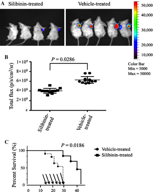 Silibinin treatment decreased tumor volume and increased survival in mice with 4T1 breast cancer tumors. BALB/c mice were inoculated with 1 × 106 4T1-luciferase tumor cells and then treated with silibinin by gavage three times per week starting on day 14 (150 mg/kg). (A) Pseudo color luminescent images represent increasing emitted light and tumor volumes (blue, green, yellow, and red from least to most intense, respectively). Representative silibinin-treated versus vehicle-treated mice. In vivo visualization of 4T1 breast tumor volume at day 28 after tumor inoculation. (B) Total flux detected in individual mice after silibinin treatment on day 28 after tumor inoculation comparing silibinin-treated and control groups. Total flux collected in an ROI following a 30-sec exposure time. (C) Survival of silibinin-treated BALB/c mice versus vehicle-treated BALB/c mice. The times of gavage are shown as arrows. Data are compiled from three separate experiments (n = 4–5 per group).