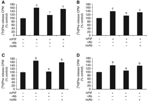 Effect of anti-PIF-receptor antibody on PIF-induced protein degradation in murine myotubes (A) and (B) and human myotubes (C) and (D). Total protein degradation in C2C12 myotubes after 24 h incubation with either murine (A) or human (B) PIF (4.2 nM) and in human myotubes incubated with either murine (C) or human (D) PIF (4.2 nM) in the absence or presence of rabbit anti-murine PIFR antibody (rAb; 5 μg ml−1), or non-specific rabbit antibody (nsAb; 5 μg ml−1). Both antibodies were added 2 h prior to PIF. The experiment was repeated three times. Differences from control are indicated as b, P<0.01 or c, P<0.001, while differences in the presence of antibody are shown as e, P<0.01 or f, P<0.001.