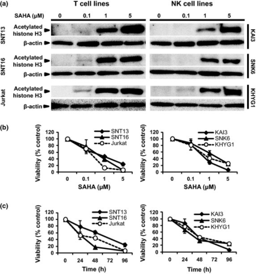 Suberoylanilide hydroxamic acid (SAHA) inhibits the deacetylation of histone H3 protein and decreases the viability of T and natural killer (NK) cell lines. (a) SNT13, SNT16 (Epstein–Barr virus [EBV]-positive T cell line), Jurkat (EBV-negative T cell line), KAI3, SNK6 (EBV-positive NK cell line) and KHYG1 (EBV-negative NK cell line) cells were treated with the indicated SAHA concentrations for 24 h, and acetylated histone H3 was detected by immunoblotting. β-Actin was used as a loading control. (b) Each cell line was treated with the indicated concentrations of SAHA for 96 h or (c) with 5 μM SAHA for the indicated times. Data are expressed as means ± SEM.