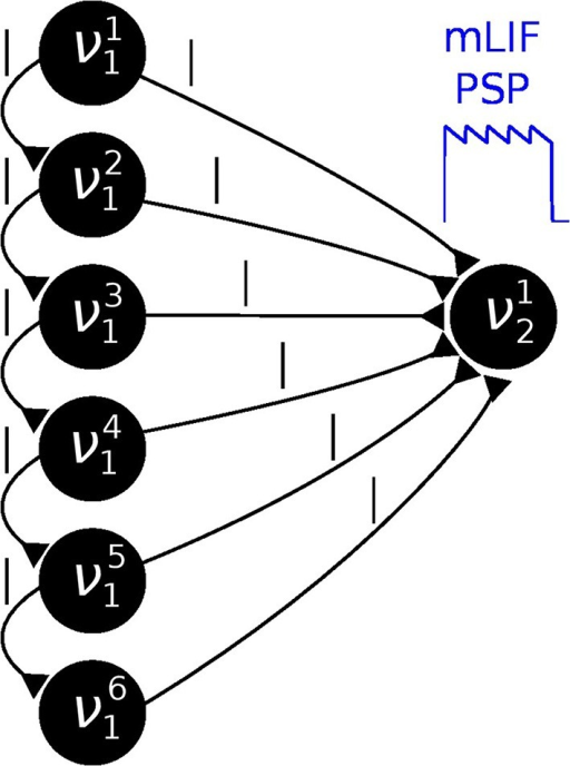 In order to establish a coupling which is closer to the ideal one (rectangular PSP), the following network structure was set up: Instead of using one principal neuron ν per RV, each RV is represented by a neural chain. In addition to the network connections imposed by the translation of the modeled Bayesian graph, feedforward connections between the neurons in this chain are also generated. Furthermore, each of the chain neurons projects onto the first neuron of the postsynaptic interneuron chain (here: all connections from νi1 to ν12). By choosing appropriate synaptic efficacies and delays, the chain generates a superposition of single PSP kernels that results in a sawtooth-like shape which is closer to the desired rectangular shape than a single PSP.