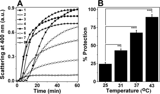 Temperature-dependent chaperone-like activities of M. leprae HSP18.(A) DTT-induced aggregation of 0.35 mg/ml insulin (Ins) in the absence and presence 0.35 mg/ml HSP18 at different temperatures (25, 31, 37 and 43°C). Aggregation was initiated by adding 20 mM DTT and scattering at 400 nm was monitored at the respective temperatures. Trace 1: Ins alone at 25°C; Trace 2: Ins + HSP18 at 25°C; Trace 3: Ins alone at 31°C; Trace 4: Ins + HSP18 at 31°C; Trace 5: Ins alone at 37°C; Trace 6: Ins + HSP18 at 37°C; Trace 7: Ins alone at 43°C; Trace 8: Ins + HSP18 at 43°C; (B) Percent protection ability of M. leprae HSP18 against insulin aggregation at different temperatures. Data are means ± the standard deviation from triplicate determinations. **p< 0.005 and ***p< 0.0005.