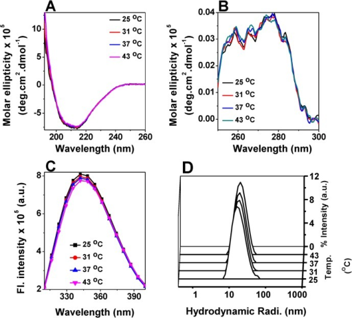 Effect of temperature on the structure of M. leprae HSP18.Far-UV CD spectra (A) and near-UV spectra (B) of HSP18 at different temperatures (25, 31, 37 and 43°C). The concentrations of the protein samples used in far- and near-UV CD experiments were 0.2 and 0.5 mg/ml, respectively. (C) Tryptophan fluorescence spectra of HSP18 (0.05 mg/ml) were recorded from 310–400 nm at various temperatures (25, 31, 37 and 43°C). An excitation wavelength of 295 nm was used. Both the slit widths for excitation and emission were 5 nm. Data were collected at 0.5 nm wavelength resolution. (D) Intensity particle size distribution spectra of M. leprae HSP18 were recorded at various temperatures (25, 31, 37 and 43°C). Each of these spectra is an average of 48 scans. For each experiment, spectra were recorded after incubating HSP18 at respective temperature for 1 hr.