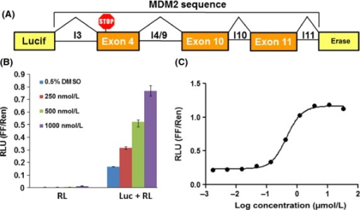 Characterization of the exon-skipping reporter. (A) The Luc-MDM2 construct contains parts of an MDM2 minigene sequence (intronic and exonic sequences) within the luciferase ORF in the pGL4.51 vector. (B) SK-MEL-2 cells transfected with the RL-CMV plasmid alone (RL) or Luc-MDM2 and RL-CMV plasmids (Luc + RL) and treated with either 0.5% DMSO or different concentrations of sudemycin D1 for 4 h. Dose response curve of sudemycin D1 in Luc-MDM2/RL-CMV dual reporter assay. SK-MEL-2 cells were co-transfected with Luc-MDM2 and RL-CMV plasmids and treated with indicated sudemycin D1 concentrations for 4 h. RLU, relative luminescence units; FF/Ren, firefly/Renilla