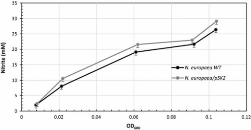 Ammonia to nitrite conversion as a function of cell mass (OD600 nm) for growing cultures of N. europaea[pSK2] and untransformed N. europaea. Each point is the average of 10 independent experiments; error bars indicate standard deviations.
