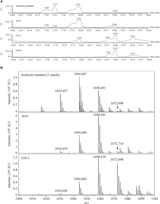 LC-MS of surfactin purified from strains 3610, F29-3, and FK955. (A) Strain 3610 was cultured in 50-ml LB broth; strains F29-3 and FK995 were cultured in 1 liter LB broth for 16 h. Surfactin in the culture supernatants was purified and analyzed by HPLC. Pure surfactin was used as a standard. (B) The HPLC peaks with retention times of 17.94 (strain 3610) and 17.97 (strain F29-3) were analyzed by MALDI-TOF mass spectrometry. The peaks with m/z 1030, 1044, 1058, and 1072, which correspond to the mass of [M + Na]+ ions of surfactin isoforms, are indicated. AU, Absorbance Unit.