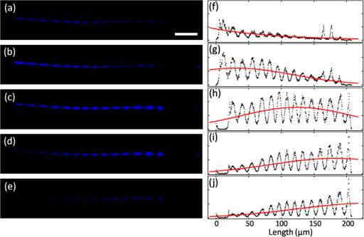 Counter-propagating pulses.(a–e) Optical microscope images of SHG with different delay in optical path. Scale bar, 50 μm. (f–j) Corresponding measured (black dots) and fitted (red line) intensity profile of (a–e).