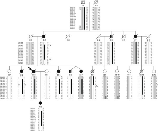Pedigree diagram showing affection status and disease haplotype. Squares indicate males and circles females; filled arrow indicates proband; black symbols show individuals clinically diagnosed with dementia, either AD or FTLD; diagonal stripes, individuals diagnosed with MND; and combined black and diagonal stripes, individuals diagnosed with FTLD-MND. A diagonal line marks deceased subjects. Individual I:1, lived until his 80s, but was thought to have had some personality changes. Alleles in parentheses are inferred. 'X' indicates upper and lower recombination breakpoints that define the minimal disease haplotype.