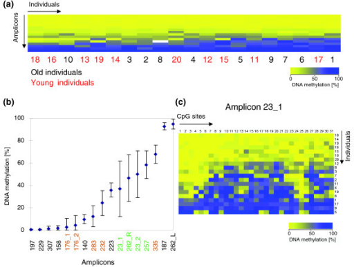 Inter-individual variation of DNA methylation. (a) DNA methylation levels of all amplicons studied in blood from ten old (1 to 10) and ten young (11 to 20) individuals. The data were sorted by the average level of DNA methylation among amplicons and individuals. Old individuals are represented by black numbers, young individuals by red numbers. The continuous yellow to blue color code represents the DNA methylation level of the PCR products. (b) Average DNA methylation level of all 16 amplicons among 20 individuals (1 to 20). The error bars indicate the standard deviation among the samples. Amplicon 262 was split into 262_L (left part) and 262_R (right part) because of the different methylation observed in these two parts. Green color labeled amplicons showed a maximal methylation difference between individuals of more than 50%; orange labels indicate amplicons with >30% methylation difference. (c) DNA methylation pattern of amplicon 23_1 in individuals 1 to 20. Each column represents a single CpG site. Each row corresponds to one individual.
