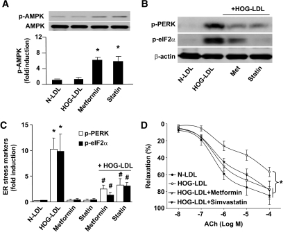 Genetic activation or inhibition of AMPK alters HOG-LDL–induced ER stress in ex vivo aortae. A: Aortic rings were cut (∼3-mm length) and pretreated with 2 mmol/l metformin or 50 μmol/l simvastatin for 30 min, followed by addition of 100 μg/ml HOG-LDL or N-LDL (latter as control), with or without metformin or statin for up to 6 h. *P < 0.05 metformin or statin vs. controls; #P < 0.05 controls vs. metformin plus HOG-LDL or statin plus HOG-LDL. B and C: ER stress markers were detected from set (A); n ≥ 4 in each treatment. *P < 0.01 HOG-LDL vs. N-LDL; #P < 0.01 HOG-LDL+metformin or HOG-LDL+statin vs. HOG-LDL alone. D: HOG-LDL impaired aortic relaxation, which can be restored by metformin or statin. n = 4 in each group. *P < 0.05 HOG-LDL vs. N-LDL or HOG-LDL+metformin or HOG-LDL+statin.