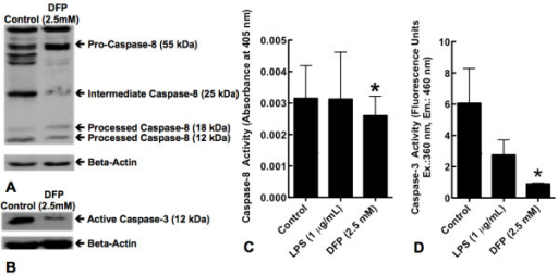 Effect of DFP on processing of pro-caspases-3 and -8 and caspases-3 and -8 activity. Human neutrophils were incubated alone (Control) or with DFP 2.5 mM for 5 hours. Cells were then lyzed and lysates were separated on 12% SDS-PAGE gel and specific antibodies were used to evaluate the pattern of caspase-8 (A) and caspase-3 (B) processing. Blot is representative of 3 separate experiments. C. Human neutrophils were incubated alone (Control), with LPS (1 μg/mL) or with DFP (2.5 mM) for 5 hours. Cells were then lyzed. Caspase-8 and caspase-3 activities were measured using specific colorimetric and fluorimetric substrates respectively. Caspase-8 (C) activity is represented as absorbance at 405 nm & caspase-3 (D) activity is represented as fluorescence units at excitation wavelength of 360 nm and emission wavelength of 460 nm. Data represent mean ± SD of 4 separate experiments. *P = 0.243 for caspase-8; *P = 0.02 for caspase-3.