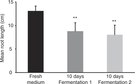 Inhibition of radish root development by supernatants of L. plantarum after 10 days under retentostat conditions. Radish root assays were performed according to Leveau and Lindow (2005). Samples were diluted 10,000 times. Error bars represent the s.d. values. **Highly significantly different from fresh medium (P<0.01 Tukey test).