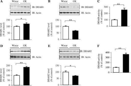 Relative expression and enzymatic activity of DDAHs in the white adipose tissue of GK rats. The extracts of the periepididymal fat pads from 11- (A–C) and 20-week-old (D–F) Wistar (open bars) and GK rats (closed bars) were analyzed for DDAH1 and DDAH2 expression, and total DDAH activity. Representative results are shown in the upper panels. Each bar in the graph represents the mean ± SEM (n = 5–10). The percentile represents the relative level of expression or activity to that of the age-matched Wistar controls. *p ≪ 0.05, **p ≪ 0.01 vs. the controls. IB, immunoblotting.