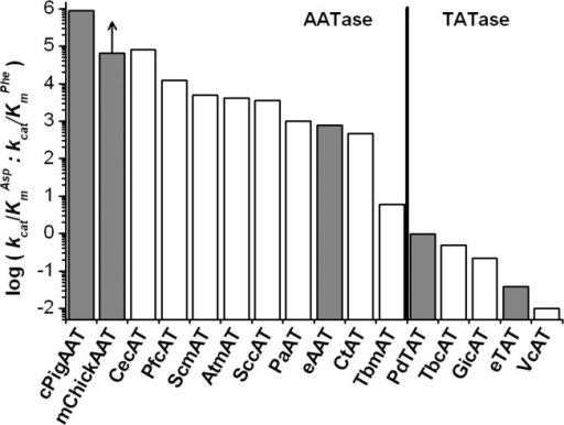 Venn diagram of conserved residues in AATases and TATases. Those conserved in ≥75% of the sequences for each substrate specificity were identified for the sequence alignment presented in Figure 4, excluding the uncharacterized sequence (AtcAT). Residues in bold type differ from the diagram presented in Rothman and Kirsch.28 Venn.out (written by Daniel Malashock, University of California, Berkeley, not published) was used to perform the sequence analysis to generate this figure.