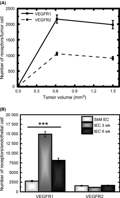 Ensemble-averaged time course of vascular endothelial growth factor receptor (VEGFR) surface distribution. (A) Tumor cells show significantly higher levels of VEGFR1 compared to VEGFR2. For a given VEGFR, the surface levels are not significantly different early in tumor development, 3 weeks, compared late in tumor development, 6 weeks. (B) Tumor endothelial cells show significant differences in VEGFR1 surface levels early in tumor development, 3 weeks, with nearly ∼15,000 VEGFR1/tEC. These levels are nearly halved late in tumor development, 6 weeks. The levels of VEGFR1/tEC at 3 and 6 weeks are significantly different from one another, and are also significantly different from the levels of VEGFR1 found to endothelial cells obtained from normal mouse skeletal muscle. The levels of VEGFR2 on tumor endothelial cells are not significantly different at 3 and 6 weeks, or on endothelial cells isolated from normal mouse skeletal muscle.*P < 0.05; **0.001< P <0.01; ***P < 0.001.