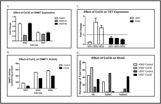 Hypoxia diminishes DNMT expression and activity and increases expression and activity of TET2 and TET3.(A) K562 and U937 cells were treated with or without 100 μM CoCl2 for 48 hours. Expression of DNMT1, DNMT3A and DNMT3B mRNA was evaluated by quantitative RT-PCR. Data are fold-change of CoCl2-treated cells compared with control. Error bar shows standard error of the mean of triplicate experiments. All changes were statistically significant, with p < 0.05. (B) U937, HL60, and K562 cells were treated overnight with or without 100 μM CoCl2. Protein lysates were assayed for DNMT1 activity. Error bars show standard error of the mean of triplicate experiments. Student's t test was performed to test for statistical significance of the indicated comparisons, and all p values are < 0.0006. (C) U937 and K562 cells were treated for 48 hours with 100 μM CoCl2. Expression of TET1, TET2, and TET3 mRNA was evaluated by quantitative RT-PCR. Data shown are fold-change of CoCl2-treated cells compared with control. Error bars show standard error of the mean of triplicate experiments. Changes in U937 cells were statistically significant, with p < 0.05, but changes in K562 were not. (D) U937 and K562 cells were treated for 48 hours with 100 μM CoCl2. The percentage of unmodified cytosine, 5mC, and 5hmC in the WT1 locus were quantified as described. Data shown are the means of triplicate samples, and this experiment was repeated 3 times with similar results. No statistical analysis of the data presented in Fig. 2D was performed because the number of transformations applied to the raw data in order to calculate the presented results (see Materials and Methods) makes all standard parametric tests of significance meaningless. Nevertheless, one can calculate that the likelihood of the observed pattern (comparing control and CoCl2-treated samples in each cell line) occurring by chance in a single experiment is 1/26, or 1.5%, and the likelihood of seeing this pattern in 3 independent experiments is 0.0153, or 3.4 x 10-6. Each experiment in this figure was repeated at least 3 times with similar results.