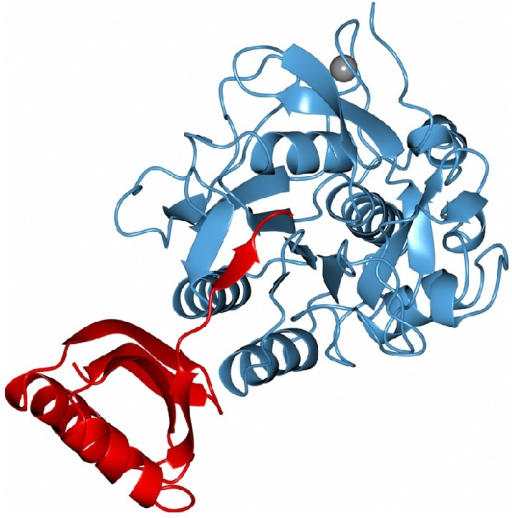 Ribbon model of subtilisin BPN (blue) from Bacillus amyloliquefaciens in complex with serine protease inhibitor POIA1 (red) and calcium ion (grey sphere). Figure from pdbid: 1V5I.