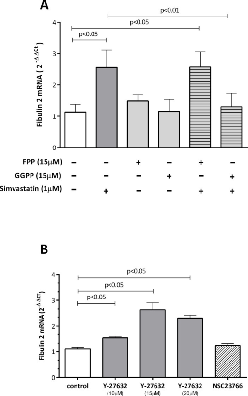 Effect of GGPP and FPP (A) and the ROCK inhibitor Y-27632 and Rac inhibitor NCS23766 (B) on simvastatin-induced fibulin-2 mRNA levels in human coronary artery SMCs.Cells were incubated with simvastatin and isoprenoids or with the inhibitors for 24 hours. The results are shown as the mean with the standard error of the mean (SEM) for twelve independent experiments in both A and B (2 with cell lot number 4C0915, 4 with cell lot number 4C1284, and 6 with cell lot number 886619). Comparisons were performed using ANOVA followed by Dunett post-test correction. FPP: farnesyl pyrophosphate, GGPP: geranylgeranyl pyrophosphate.