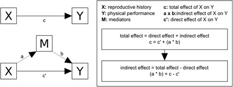 Strategy to analyze mediation factors between reproductive exposures and physical performance, using a model proposed by Preacher and Hayes (2004) [27]