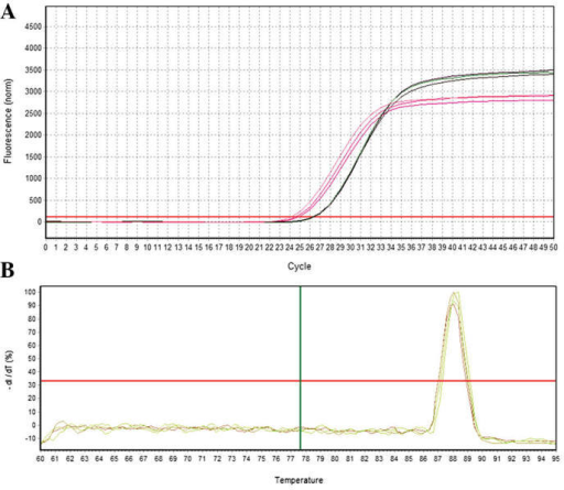 Quantification curve and melting curve for EphA2. (A) EphA2 amplification curve. (B) EphA2 melting curve.