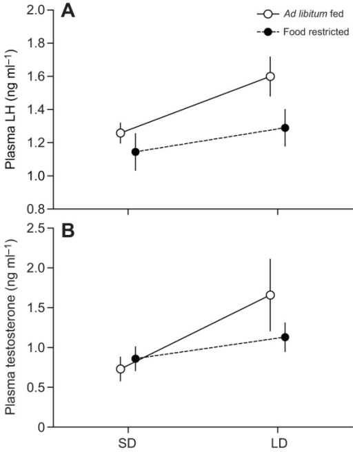 Effect of photoperiod and food availability on pre-challenge plasma luteinizing hormone (LH) and testosterone. Towhees were either ad libitum fed (N=9) or food restricted (70% of ad libitum consumption; N=8) and initially exposed to short day lengths before being transferred to long days. The photostimulated increase in pre-challenge plasma luteinizing hormone (A) and testosterone (B) of adult male Abert's towhees was not significantly affected by food availability. Data points are means±s.e.m.