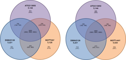 Venn diagrams based on genome information of INT-5 strains.Venn diagrams showing orthologous ORFs among four mycobacterial species as determined by BLASTCLUST analysis. Numbers in parenthesis include paralogous ORFs.