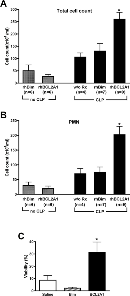Treatment with rhBCL2A1 increases neutrophils in peritoneum following CLP.Mice were treated once by i.p. injection with 1 µg of rhBCL2A1 or rhBim at 18 hours prior to CLP. Peritoneal lavage fluid was collected at 24 hours following CLP. Panels A and B show the total number of leukocytes and neutrophils (PMNs) in lavage fluid. Mice treated with rhBCL2A1 showed an increase in peritoneal PMNs following CLP as compared to mice that did not receive CLP or mice that were treated with rhBim. Panel C shows the viability of peritoneal neutrophils at 24 hours following CLP as assessed by staining with annexin V and 7-amino-actinomycin D. Treatment with rhBCL2 significantly increased the number of viable neutrophils compared to treatment with saline or rhBCL2A1. *p<0.01.