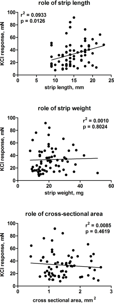 Role of normalization of contractile responses to 50 mM KCl based upon strip length (upper panel), weight (middle panel), or calculated cross-sectional area (lower panel). Each data represents one strip (in total 66 strips from 30 patients), and data obtained on days 0–2 were included.