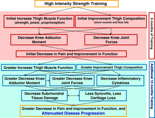 Hypothesized pathways mediating high-intensity strength-training outcomes at 6 and 18 mos.
